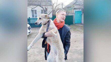 Избитую хозяйкой собаку в Воронеже забрали у семьи волонтёры