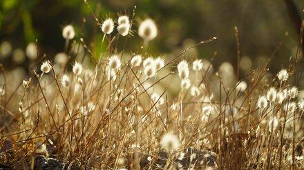 В первую неделю августа в Воронежскую область вернётся жара