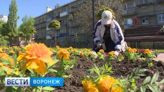 Площадь высаженных в Воронеже клумб превысит размер трёх футбольных полей