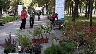 В Кольцовском сквере высадили деревья из Подгоренского питомника