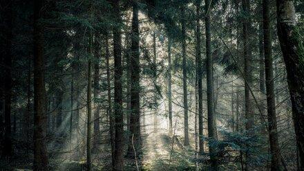 Под Воронежем в лесополосе нашли повешенным 17-летнего подростка