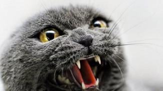Кошки, собаки и лисы: в Воронежской области в два раза увеличились случаи бешенства