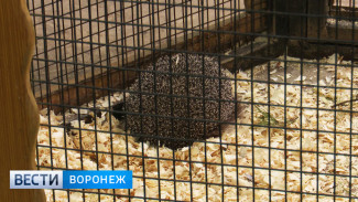 Звери-синоптики из Воронежского зоопарка предсказали погоду