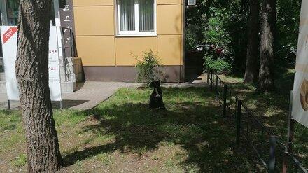 В Воронеже «чипированная» собака бросилась на ребёнка