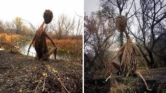 Художница сплела огромную скульптуру из лозы малины в воронежском Дивногорье