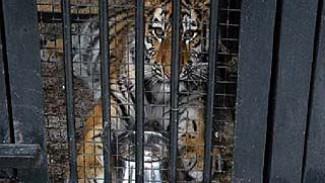 К 20-летию Воронежского зоопарка состоится открытие вольера для крупных хищников