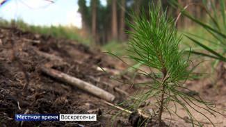 Гибнут от рук людей. Как в Воронежской области спасают леса после поджогов