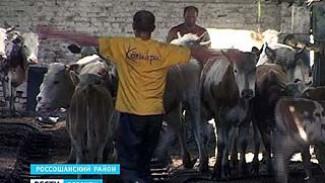 В Россошанском районе развалился колхоз. Более сотни людей ищут вакансии
