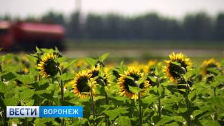 Депутат Госдумы от Воронежской области: «Аграриям этим летом бояться нечего»