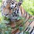 Воронежский зоопарк откроется для посетителей после трёхмесячного перерыва из-за пандемии