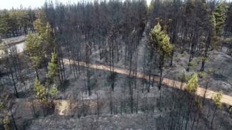Причиной крупного пожара у воронежского санатория назвали поджог