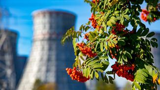 Нововоронежская АЭС перевыполнила октябрьский план по выработке электроэнергии