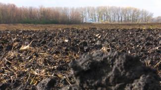 На самых плодородных землях Воронежской области хотят отказаться от химических удобрений