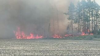 В Воронежской области загорелся лес: появилось видео