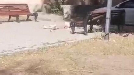 В Воронеже у многоэтажки обнаружили тело голого мужчины