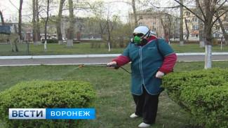 Воронежскую область уже атакуют клещи – дети и женщины страдают чаще