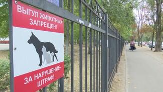 Родители против собачников. В Воронеже обострилась война за территории школ