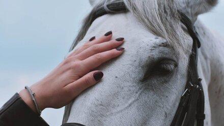 На воронежской молочной ферме лошадь едва не убила рабочего