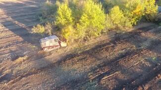 В Воронеже активисты сообщили о вырубке отданных на сохранение деревьев в яблоневом саду