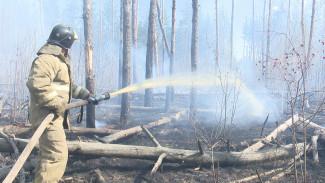 Крупный ландшафтный пожар в Воронеже подобрался к жилым домам