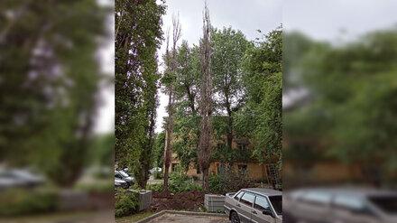 «Не нашлось денег?» Воронежцы пожаловались на оставленные при ремонте двора сухие тополя