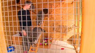 Нежность за деньги. Где в Воронеже после запрета контактных зоопарков можно погладить животных