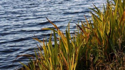 У популярного воронежского пляжа утонул 14-летний подросток