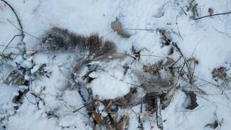 В Воронежской области поймали расчленившего косулю браконьера