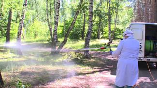 Санврачи отложили обработку от клещей двух популярных воронежских парков