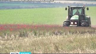 Поле с маком перепахал трактор - в рамках операции воронежской наркополиции