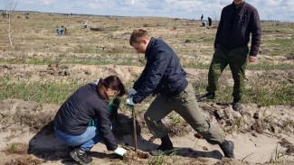 Воронежцы высадили на Кожевенном кордоне 20 тыс. деревьев