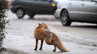 Дикие животные в 2020 году в два раза чаще кусали жителей Воронежской области