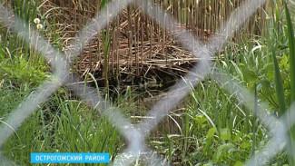 В Острогожском районе частник оставил без подхода к реке жителей двух хуторов