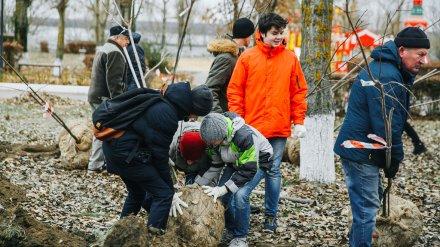 В Нововоронеже создали аллею, посвящённую 100-летию комсомола