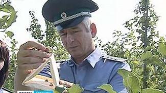 Россельхознадзор собрал урожай насекомых для переписи вредителей