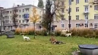 Воронежцы сообщили о пугающей детей стае диких собак на Советской площади