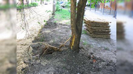 В Воронеже подрядчика оштрафовали за повреждение кленовой аллеи при ремонте дороги