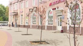 В Воронеже погибли посаженные посреди тротуара деревья