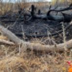 Охватившие пригород Воронежа пожары поставили под угрозу строящийся объект