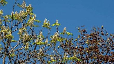 «Цветут из-за стресса». Как воронежцам помочь деревьям, «перепутавшим» осень с весной