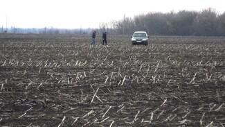 Вместо зелени серые пейзажи. Как воронежские аграрии будут спасать урожай