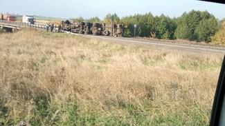 На трассе в Воронежской области перевернулась гружённая свёклой фура