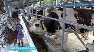 Сельхозвыставка в Новой Усмани - всё, чем гордятся воронежские животноводы