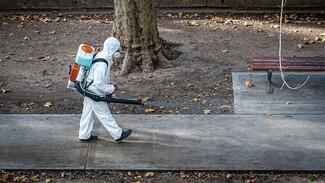Почти 200 воронежцев за сутки избавились от коронавируса