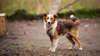 В Воронеже запланировали построить несколько собачьих приютов вместо одного