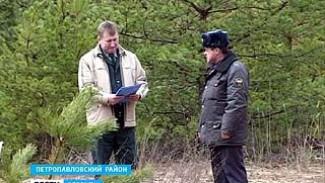 Горячая пора наступила для всех лесоводов Воронежской области