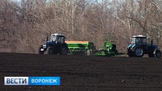 Воронежские аграрии приступили к весенне-полевым работам