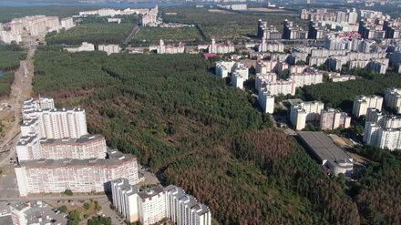 В Северном лесу Воронежа выставят охрану