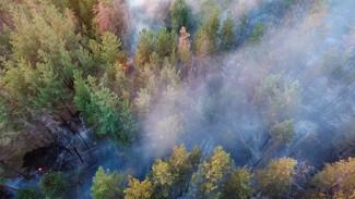 Воронежцам рассказали о самых пожароопасных участках лесов