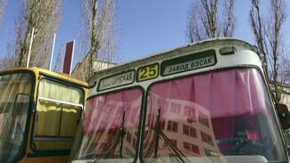 «Луноход» и Ikarus. Какие автобусы есть на ретровыставке в Воронеже и когда её пополнит ПАЗ